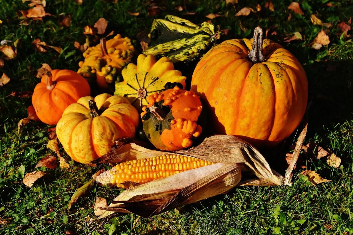pumpkins-on-grouund